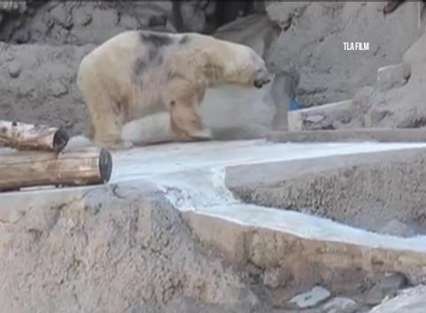 News video: Thousands Sign Online Petition to Move 'World's Saddest' Polar Bear